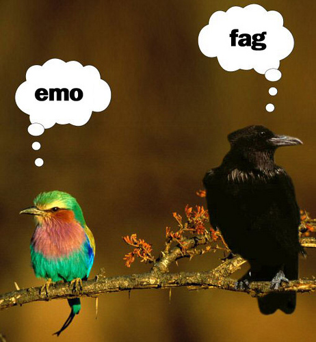 Emo & Fag - bird picture